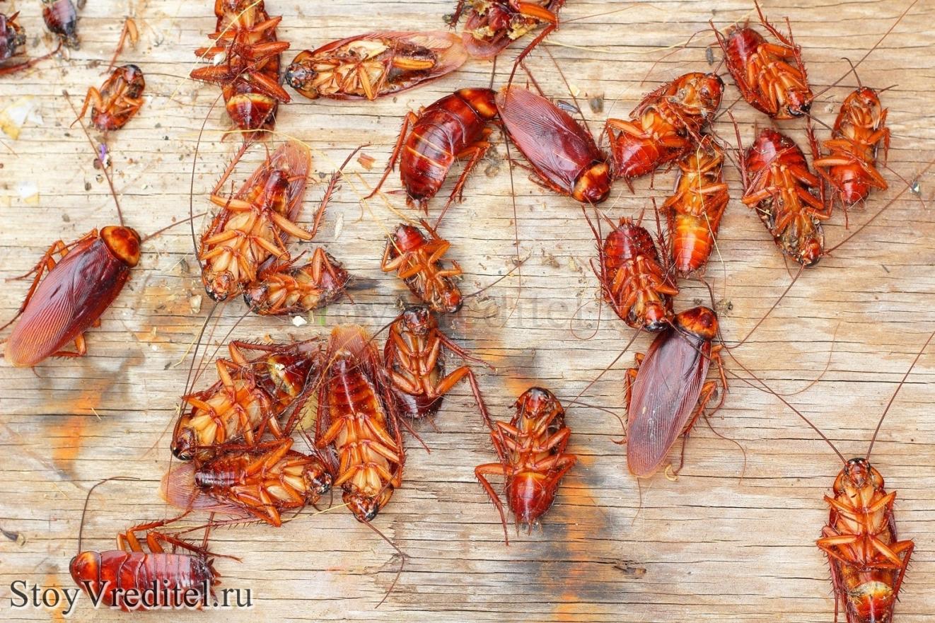 К чему снятся тараканы и опарыши фото